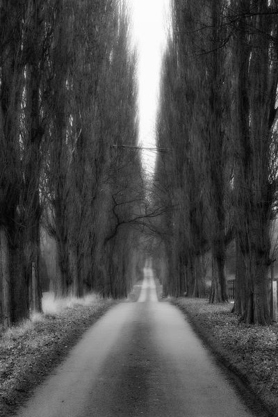Hatfield Heath, Essex, UK. January 23, 2011.   Image is a monochrome, black and white picture of a very long tree lined road. The road is very narrow, constrained and held tight between very dense trees that lead off into the distance