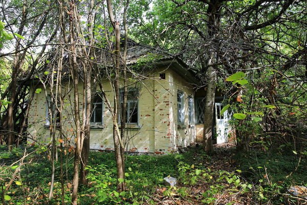 The one-storey white house located in abandoned countryside of Chernobyl exclusion zone. The house surrounded by trees and enlaced with branches. Green leaves and grass everythere. Shot on a sunny summer day