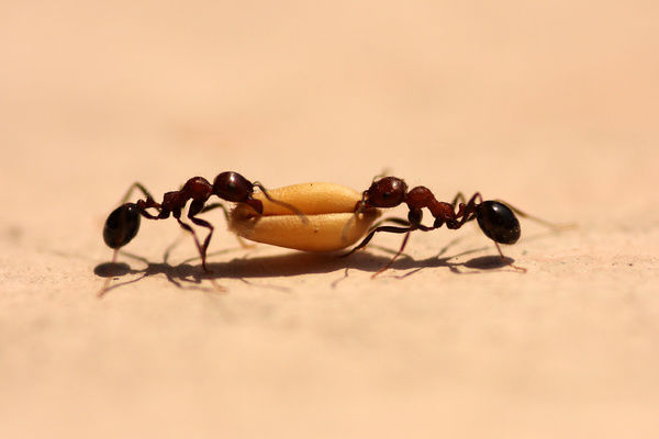 Ants Working Togeather Photo Prints 14620521 From Fine Art