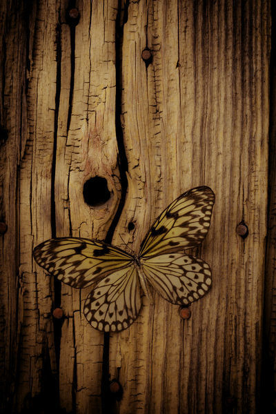 Butterfly On Old Wood Wall