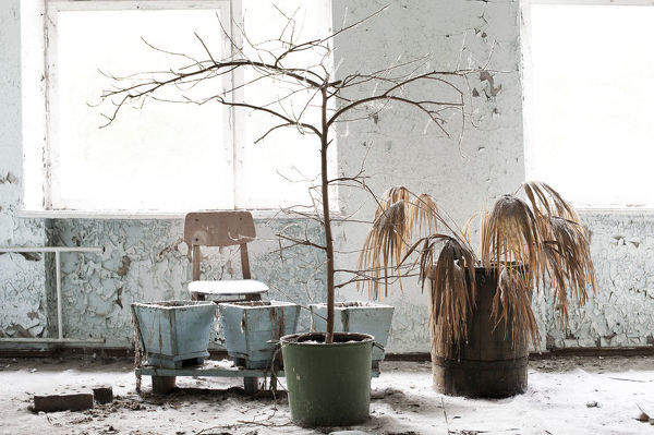 This image was taken in an abandoned hospital in Pripyat, Chernobyl. The dead tree and plants sit in front of chair by a window