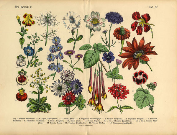 Very Rare, Beautifully Illustrated Antique Engraved Victorian Botanical Illustration of Flowers of the Garden: Plate 57, from The Book of Practical Botany in Word and Image (Lehrbuch der praktischen Pflanzenkunde in Wort und Bild), Published in 1886