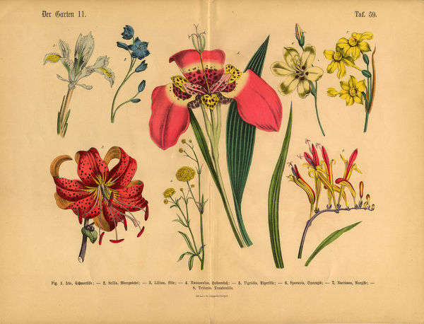 Very Rare, Beautifully Illustrated Antique Engraved Victorian Botanical Illustration of Flowers of the Garden: Plate 59, from The Book of Practical Botany in Word and Image (Lehrbuch der praktischen Pflanzenkunde in Wort und Bild), Published in 1886