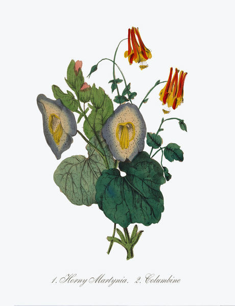Extremely Rare, Beautifully Illustrated Antique Victorian Engraved Botanical Illustration of the Hand Colored Horny Martynia and Columbine from The American Flora, History of Plants and Wild Flowers: Their Scientific and General Descriptions