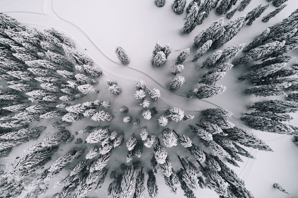 Winter forest with cross-country skiing trail - aerial view