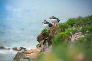 3 puffins on a cliff