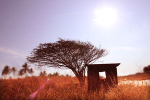 Abandoned hut with dried weeds
