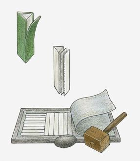 Illustration of papyrus stem used to make paper, and mallet and stone used in Ancient