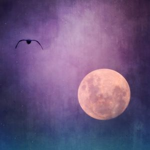 Silhouette Bird Flying Towards Moon At Night