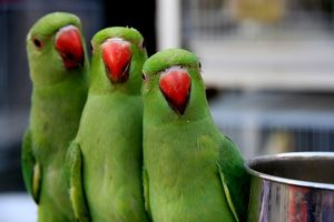 Close-Up Of Parrots Against Blurred Background