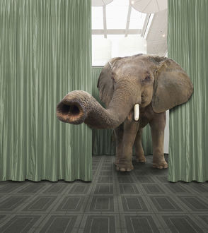 Elephant walking in convention room