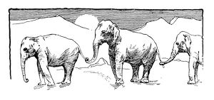 Antique children's book comic illustration: elephants