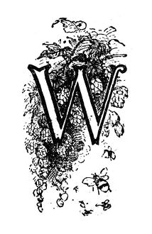 Antique children's book comic illustration: Ornate letter W