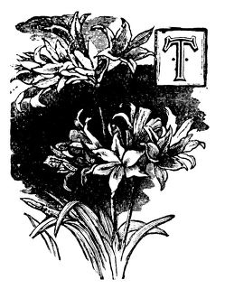 Antique children's book comic illustration: Ornate letter T