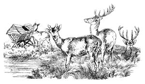 Antique illustration of group of deer, stag at the pond