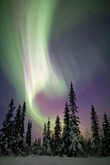 Aurora borealis and snow covered trees