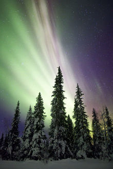 Aurora Borealis and Trees