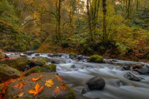 Autumn in Bridal Veil Falls State Park Oregon
