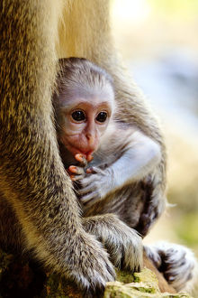 Baby monkey portrait