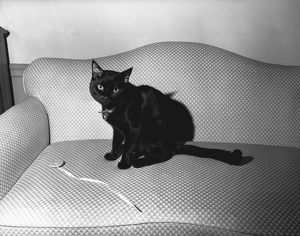Black cat sitting on couch, (B&W)