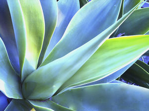 Blue Agave Colours