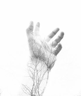 Close-Up Of Persons Hand With Tree As Veins