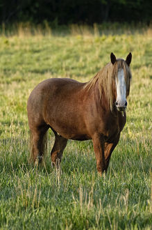 A brown horse is standing in a green grass field