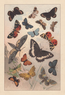 Butterflies of the European Alps, lithograph, published in 1893
