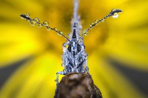 Butterfly with dew drops