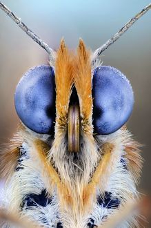 Butterfly eyes, close up