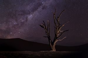 Camel Thorn Trees at Deadvlei near Sossusvlei with Milky Way, Namibia, Africa