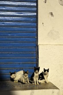 Cats in the Medina