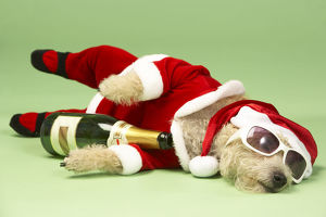 Champagne and Shades Santa Dog