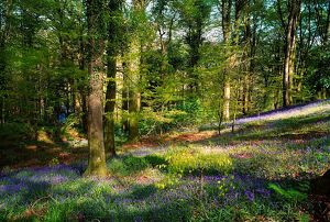 Clara Vale, Co Wicklow, Ireland, Woods In Spring