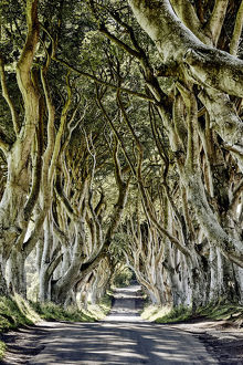 travel/destinations game thrones landscape prints/dark hedges ballymoney ireland