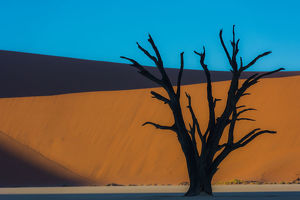 Dead Acacia tree silhouetted against sand dunes at Dead Vlei, Namibia.