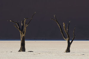 Dead trees in the area known as the Deadvlei which is deep within the confines of