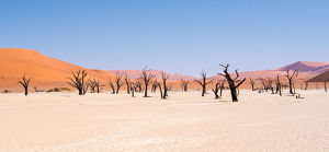 <b>Dead Vlei, Namib-Naukluft Park, Namibia</b><br>Selection of 116 items