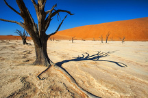 The Dead Trees of Deadvlei in the Intense Heat of December in Namib-Naukluft National Park