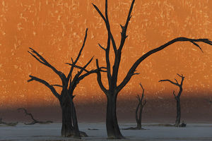 Dead Trees, Dry Clay Pan, Dead Vlei, Namibia