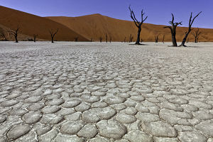 Dead Vlei in Sussusvlei, Namibia