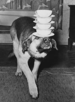 Dog Carrying Cups