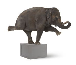 Elephant performing trick on box