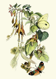 Fairies playing with butterflies