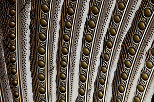 Argus Pheasant Wing Feather Pattern