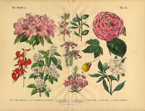 Flowers of the Garden, Victorian Botanical Illustration
