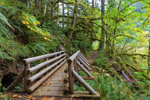 Footbridge at Butte Creek Hiking Trail