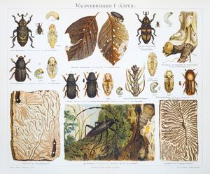 Forest destroyer insects lithograph 1897