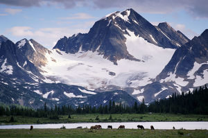 HORSES IN TONQUIN VALLEY, JASPER NATIONAL PARK, CANADA