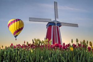 Hot Air Balloon Over Tulip Field